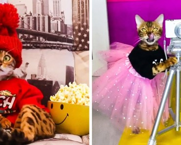 Adorable Pets in Costumes And Dresses Compilation - adorable pets in costumes and dresses compilation