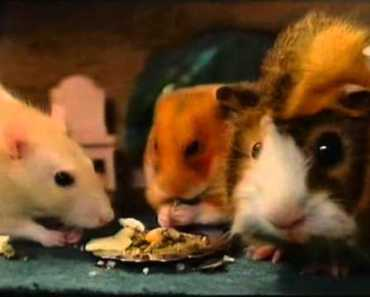 adventures on the river bank Hammy Hamster - adventures on the river bank hammy hamster