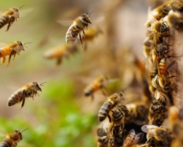 BEE ARMY - The Power Of Teamwork - Smart And Hard-Working Bees Videos Compilation 2018 [BEST OF] - bee army the power of teamwork smart and hard working bees videos compilation 2018 best of