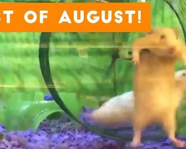 Funniest Pet Reactions & Bloopers of August 2017 | Funny Pet Videos - funniest pet reactions bloopers of august 2017 funny pet videos