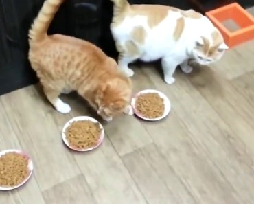 Funny CAT compilation - Try Not To Laugh - funny cat compilation try not to laugh