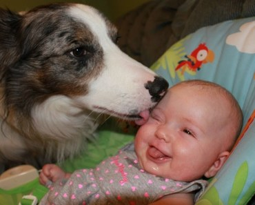 Funny Dogs Kissing Babies Compilation! - funny dogs kissing babies compilation