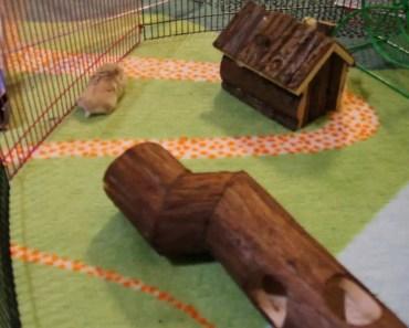Funny hamster park - funny hamster park