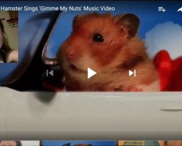 Funny hamster vines - funny hamster vines