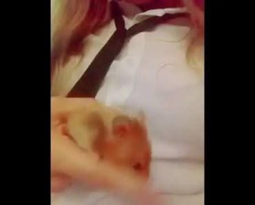 FUNNY HAMSTERS VIDEO - funny hamsters video