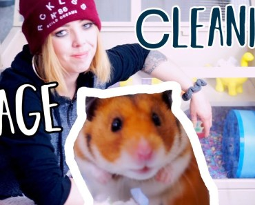 Hamster Cage Cleaning   Syrian Hamster - hamster cage cleaning syrian hamster
