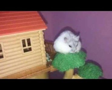 Hamster | Hamster Cage Tour | Cute Hamster Doing Funny Things Part 44 - hamster hamster cage tour cute hamster doing funny things part 44