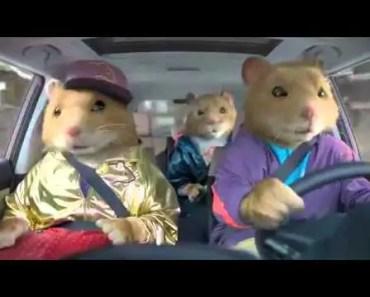 Lets Dance Kia Soul Hamster Commercial [HD] 2012 Maxchiney - lets dance kia soul hamster commercial hd 2012