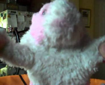 PARTY ROCK (FUNNY HAMSTER STYLE) WITH HAMMY HAMSTER - party rock funny hamster style with hammy hamster