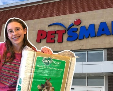 PetSmart Hamster Haul (Shopping at PetSmart) - petsmart hamster haul shopping at petsmart