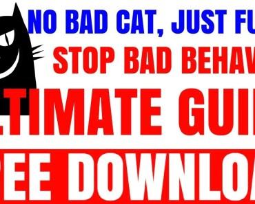 Super Funny Cats Videos Compilation 804 | Cats scared of Cucumbers Compilation - Part 2 - Cats Vs - super funny cats videos compilation 804 cats scared of cucumbers compilation part 2 cats vs