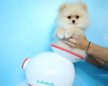 Testing Out Weird Dog Gadgets With NEW PUPPY! - testing out weird dog gadgets with new puppy