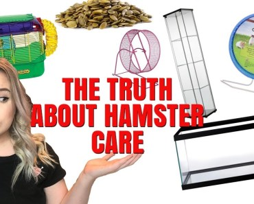 THE TRUTH ABOUT HAMSTER CARE + HAMSTER MISCONCEPTIONS! - the truth about hamster care hamster misconceptions