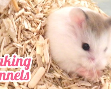 Tiny Hamster Makes Underground Tunnels! (Very short ASMR) - tiny hamster makes underground tunnels very short asmr