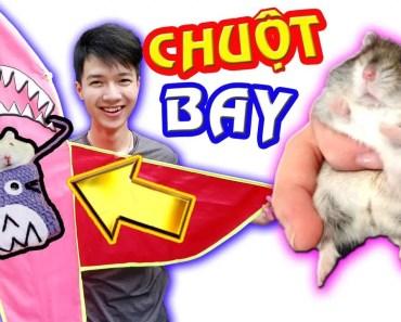 Tony   Chuột Milo Tập Lái Máy Bay Cá Mập - HAMSTER VS KITE - tony chuot milo tap lai may bay ca map hamster vs kite