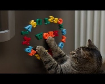 Top 10 Of The Most Intelligent Cats Ever! - top 10 of the most intelligent cats ever