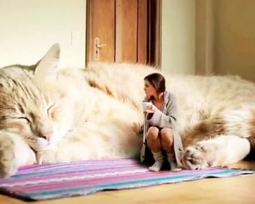 10 Largest Cats In The World - 10 largest cats in the world