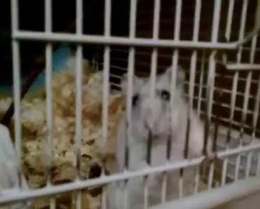 Funny Hamster - 1525373389 funny hamster