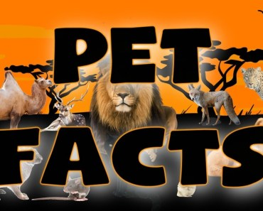 5 AMAZING Facts About Rats - 5 amazing facts about rats