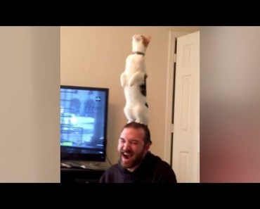Are this the BEST CAT FAILS YOU'VE EVER SEEN or what?! - Extremely FUNNY CAT compilation - are this the best cat fails youve ever seen or what extremely funny cat compilation