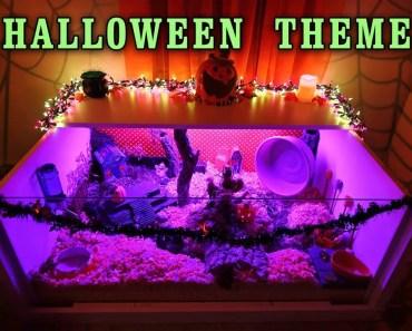 Carob's HALLOWEEN Hamster Cage Theme! - carobs halloween hamster cage theme