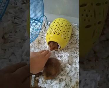 Cut funny hamsters - cut funny hamsters