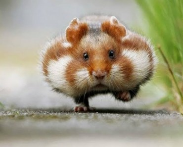 Cute funny animals that can kill you! - it's funny - cute funny animals that can kill you its funny