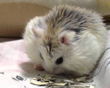 Cute Hamster Eating Seeds - cute hamster eating seeds