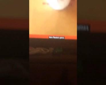 Funny cat video - funny cat video