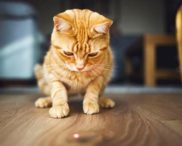 Funny Cats Chasing Laser Pointers - Epic Laugh - funny cats chasing laser pointers epic laugh