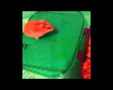 Funny Hamster Slide - funny hamster slide