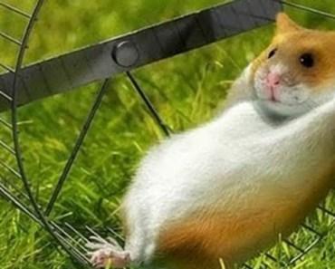 Funny hamsters in wheel videos- Esiky Hamster - funny hamsters in wheel videos esiky hamster