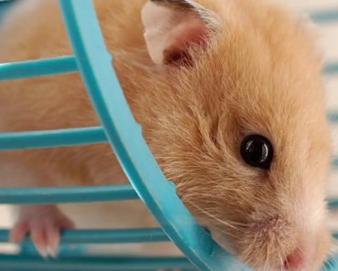 Funny hamsters!!! - funny hamsters