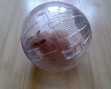 Hamster in a ball rolling on the floor - hamster in a ball rolling on the floor