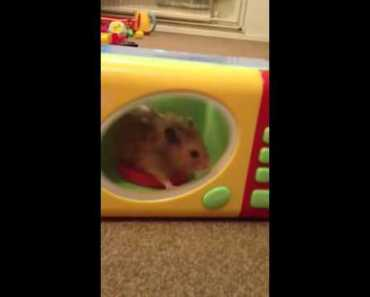 Hamster in microwave! - hamster in microwave