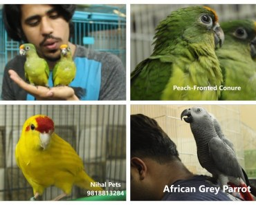 PARROT PRICES IN INDIA | HAMSTERS | Wildly Indian - parrot prices in india hamsters wildly indian