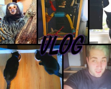 Rainforest Animals, Wake Up With Me, Cats, Rats & More   Vlog - rainforest animals wake up with me cats rats more vlog