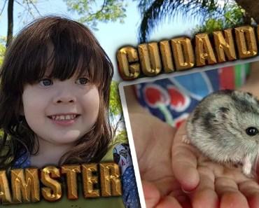 ROTINA DO HAMSTER DA AMELIE - rotina do hamster da amelie
