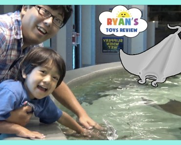 Stingray Feeding for Kids at the Aquarium! - stingray feeding for kids at the aquarium