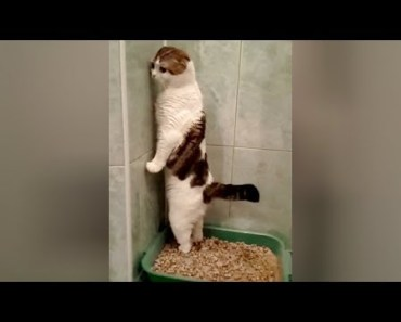 SUPER WEIRD CATS that will totally CONFUSE YOU! - Extremely FUNNY CAT VIDEOS compilation - super weird cats that will totally confuse you extremely funny cat videos compilation