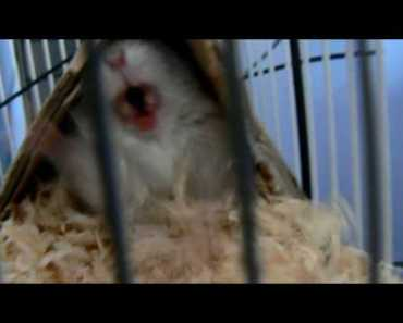 the attack of angry hamster - the attack of angry hamster