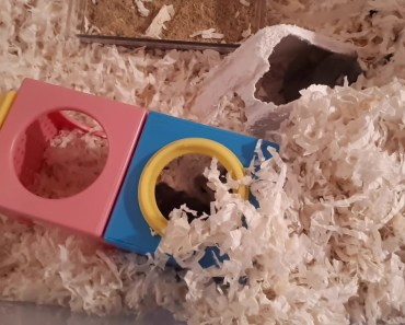 Times I Messed Up As A Hamster Owner - times i messed up as a hamster owner
