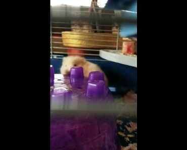 Weird things my hamster does - weird things my hamster does
