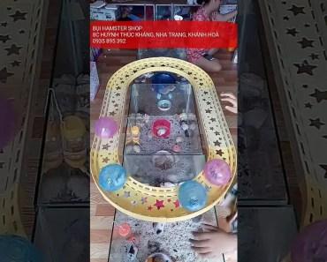 BỤI HAMSTER SHOP - HAMSTER CUTE FUNNY - 1529303932 bui hamster shop hamster cute funny