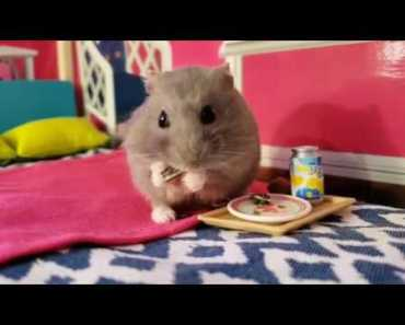 Baby Hamster wakes up to enjoy His hamazing Breakfast [Cute Animal Vid] - baby hamster wakes up to enjoy his hamazing breakfast cute animal vid