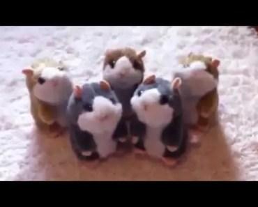 Baby With Talking Hamster - baby with talking hamster