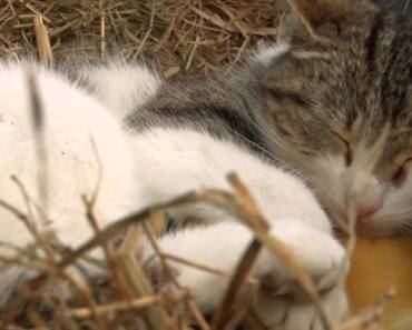 BBC Animal Odd Couples 1 of 2 (HD) - Wildlife Pets And Animals - bbc animal odd couples 1 of 2 hd wildlife pets and animals