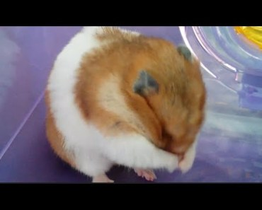 cute hamster doing funny things - cute hamster doing funny things