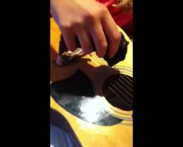 Cute Hamster Plays Guitar - cute hamster plays guitar