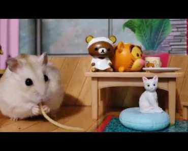 Cute Hamster tries Spaghetti for first time [cute pet vid] - cute hamster tries spaghetti for first time cute pet vid